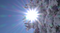LOW ANGLE, CLOSE UP: Soft winter sun shinning through lush snowy spruce branches Stock Footage
