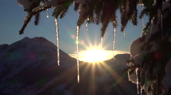 CLOSE UP: Small sparkling icicles on snowy spruce tree at golden winter sunrise Stock Footage