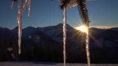 CLOSE UP: Big icy shining icicles on a snowy spruce tree at golden winter sunset Stock Footage