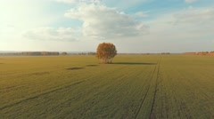 Aerial view of an autumn farm chores. Lonely tree in the middle Stock Footage