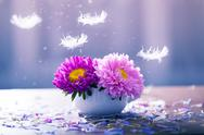 Pink aster flowers in a vase Stock Photos
