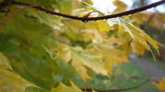 Autumn yellow leaves wet after rain close Stock Footage