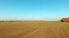 Aerial panorama of the green field. Traces of a tractor in the field Stock Footage