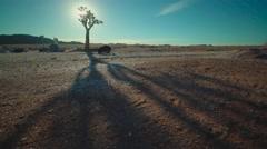 Kokerboom tree in desert landscape Stock Footage