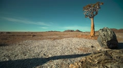 Static wide shot of lone desert tree/Kokerboom in desert landscape Stock Footage