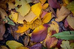 Autumn dry leafage Stock Photos