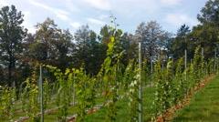 Ultra modern new vineyard in Oktober Stock Footage