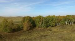 Wood panorama, aerial shoot Stock Footage