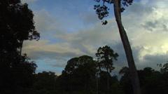 Sabah Borneo Malaysia Asia Rainforest Tree River afternoon Stock Footage