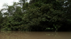 Sabah Borneo Malaysia Asia Rainforest Tree River filming from boat Stock Footage