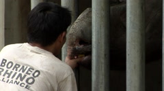 Sabah Rhino Proejcts, Vets Stock Footage