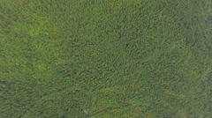 Huge green pine forest. Aerial view Stock Footage