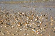 Sandy beach background with shells and stones. Stock Photos
