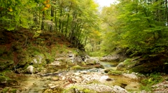 Quiet river of the Italian Alps flowing through a wood Stock Footage