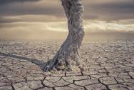 Drought Land and lonely tree Stock Photos