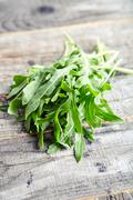 Bunch of fresh arugula leaves Stock Photos