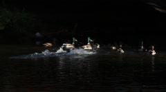 Ducks splashing in the ray of light Stock Footage