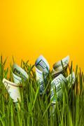 Dollars growing in green grass Kuvituskuvat