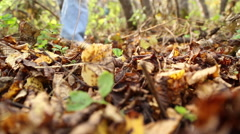 Girl picking mushrooms in the forest Stock Footage