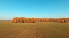Aerial Flight over fields and yellow trees. Autumn colors Stock Footage