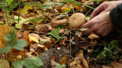 A man picking mushrooms in the forest Stock Footage