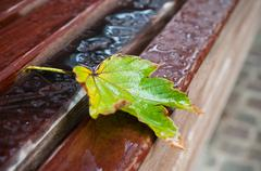 Autumnal  maple leaves with raindrops on bench in urban park Stock Photos