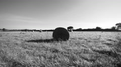 Field of round haystacks. Camera travelling and take off. 4K UHD aerial footage. Stock Footage