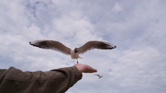 Seagull Enough Food from the Hands of HD Pro Stock Footage