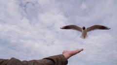 Feeding Seagulls on the Beach HD Pro Stock Footage