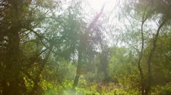 Danube delta forested wetlands in motion Stock Footage