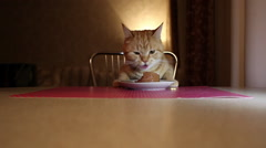 Cat to Eat From a Plate on the Table Stock Footage