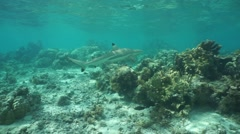 A blacktip reef shark in shallow water Stock Footage