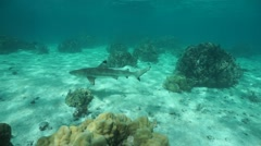 A blacktip reef shark underwater in the lagoon Stock Footage