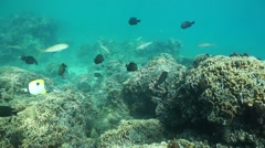 Coral reef on the ocean floor with tropical fishes Stock Footage