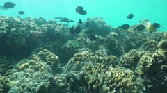 Tropical fishes in coral reef in the lagoon Stock Footage