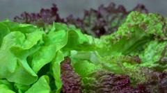 Organic lettuce leaves. Healthy nutrition. anticlockwise turntable Stock Footage