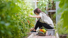Young woman with basket of greenery and vegetables in the greenhouse. Time to Stock Footage