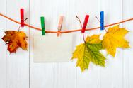 Autumn maple leaves and blank card. Stock Photos