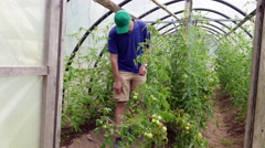 Farmer in small greenhouse Stock Footage