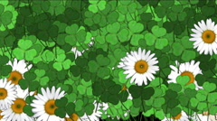 4k Clover white daisy plant vegetation leaf blade background. Stock Footage