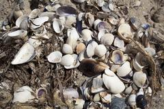 Seashells on the beach, in the sand, background Stock Photos