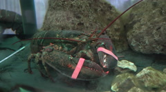 Lobster With Bound Claws in a Fish Market Stock Footage