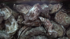 Oysters in the Water Stock Footage
