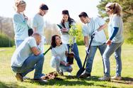 Group of volunteers planting tree in park Stock Photos
