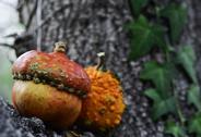 Pumpkins on a tree Stock Photos