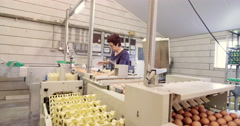 Woman sorting eggs at chicken farm Stock Footage