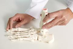 Close-up of foot bone model in hands of doctor Stock Photos