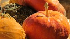 Variety of pumpkins on haystack. Stock Footage