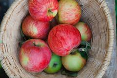 Basket with apples harvest in garden, top view Stock Photos