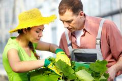 Two agriculturists with a box with seedlings Stock Photos